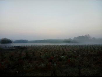 afonya-termesztes-somogyban_1.jpg