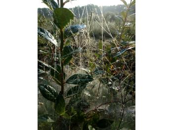 bluecrop-afonya-bokor-augusztusi-reggelen_1.jpg
